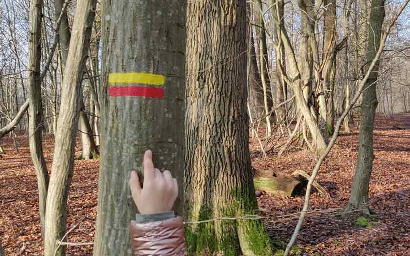 Enfant de maternelle désignant un signal pour s'orienter en forêt