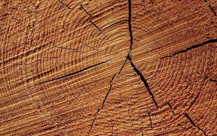 Déterminer l'âge d'un arbre à partir des stries